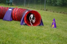 Roy's Run Agility Benefit Helps with Canine Cancer Research